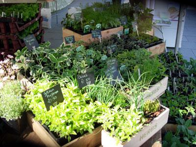 Plants - Dawson's Yard Sheffield